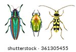 jewel beetle  metallic wood... | Shutterstock . vector #361305455