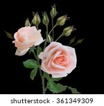 illustration with rose flowers... | Shutterstock .eps vector #361349309