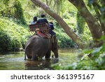 Traveler Riding On Elephants...
