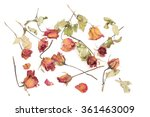 withered roses and petals... | Shutterstock . vector #361463009