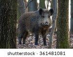 Wild Pig In Forest