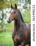 Small photo of Portrait of beautiful warmblood horse