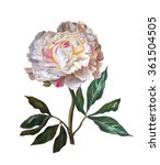 Peony Isolated On A White...