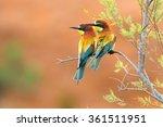 european bee eater