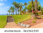 Wooden Steps And Palm Trees In...