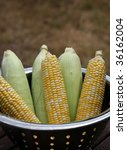 Corn in bowl - stock photo