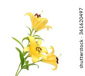 Two Yellow Lily Isolated On...