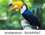 exotic toucan bird in natural...   Shutterstock . vector #361649267