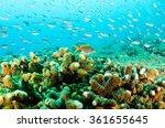 coral reef scenics of the sea... | Shutterstock . vector #361655645
