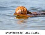 Nova Scotia Duck Tolling...