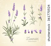 vintage set of lavender flowers ... | Shutterstock .eps vector #361770524