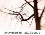 Creepy Barren Tree