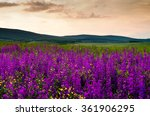 purple flower landscape | Shutterstock . vector #361906295