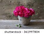 Fuchsia Carnations In A Pot