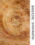 cut down tree trunk vertical | Shutterstock . vector #36215098