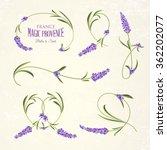 Set Of Lavender Flowers...