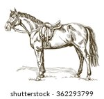 hand drawn vector horse with... | Shutterstock .eps vector #362293799