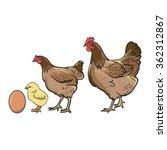 The Chicken Evolution