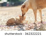Stock photo cat and dog 362322221