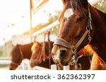 Stock photo horse riding 362362397