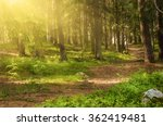 north scandinavian pine sunny... | Shutterstock . vector #362419481