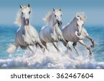 Stock photo three white horse run gallop in waves in the ocean 362467604