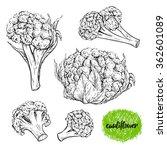 cauliflower. vintage collection ... | Shutterstock .eps vector #362601089