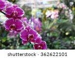 beautiful wild flower such a... | Shutterstock . vector #362622101