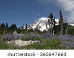 Mount Rainier National Park....