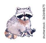 Cute Raccoon Animal. Watercolor