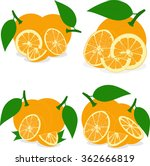 orange slices  collection of... | Shutterstock .eps vector #362666819