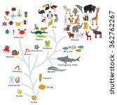 evolution in biology  scheme... | Shutterstock . vector #362762267