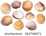 Set Of Clam Mollusc Shells...