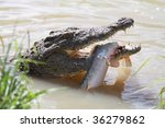 Crocodile With Green Eyes And...