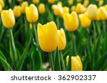 spring background with...