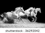 Three Stallions On Black...