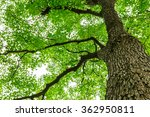 green natural background of... | Shutterstock . vector #362950811