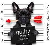 bulldog  dog with rose in... | Shutterstock . vector #363086147