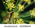 Soft abstract image of wasp on blooming fennel.  Macro with extremely shallow dof. - stock photo