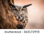 Closeup Of A Eurasian Eagle Ow...