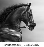 black and white portrait of a...   Shutterstock . vector #363190307