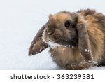 Brown Rabbit In Snow