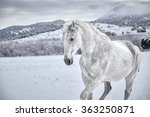 White Horse In Snow With...