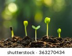 group of green sprouts growing... | Shutterstock . vector #363270434