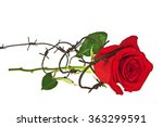 Barbed Wire With Red Rose On A...