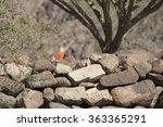 Stone Wall At Abandoned Villag...