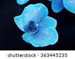 Beautiful Blue Orchid Flowers...