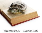Turtle On Opened Book Against...