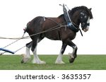 Clydesdale In Harness With...
