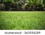 green grass texture from a... | Shutterstock . vector #363556289